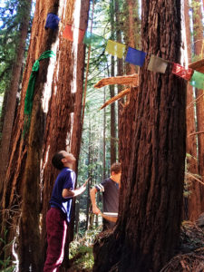 Tara Redwood School private elementary. Weekly forest trips for environmental studies.
